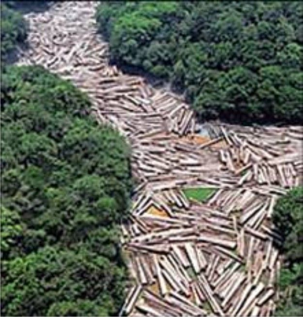 The 10 countries with the highest rate of deforestation in the world